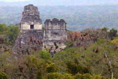Майяские руины в джунглях Tikal стоковые фотографии rf