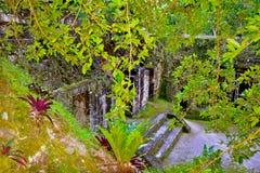 Майяские руины Стоковое Изображение