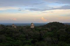 Майяские руины Tikal Гватемала стоковая фотография
