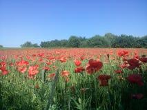 Май в поле Стоковые Изображения RF