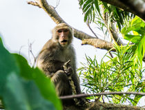 Макака в джунглях Стоковые Изображения RF