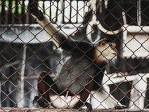 Макака в клетке зоопарка Стоковые Изображения RF