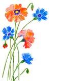 Маки и cornflowers Стоковые Изображения
