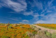 Маки долины антилопы Стоковая Фотография RF