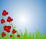 маки сада цветка красные бесплатная иллюстрация