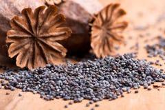 Маковые семенена Стоковое Фото