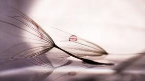 Макрос, абстрактный состав с красочной водой падает на семена одуванчика Стоковое Фото