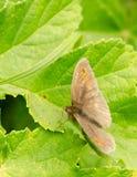 Макрос бабочки на лист Стоковые Фото