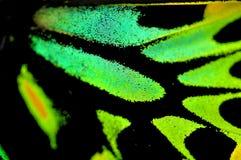 Макрос бабочки, пирамиды из камней Birdwing Стоковые Фотографии RF