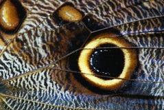 макрос бабочки Стоковое Изображение