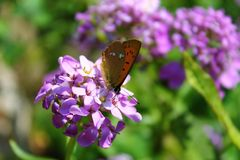 Макрос бабочки Стоковая Фотография RF
