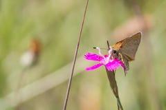 Макрос бабочки Стоковое Фото