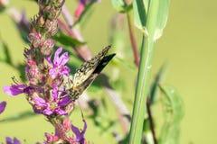 Макрос бабочки Стоковая Фотография