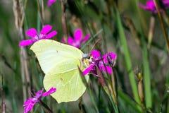 Макрос бабочки Стоковые Изображения