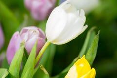 Макрос белых желтых и розовых цветков Стоковые Фотографии RF