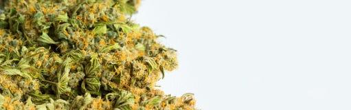 Макрос близкий вверх высушенной марихуаны конопли медицинской стоковое фото