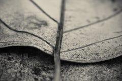Макрос близкий вверх лист детали мертвых лежа на поле в черно-белом Стоковая Фотография RF