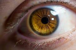 Макрос близкий вверх женского глаза стоковые фотографии rf