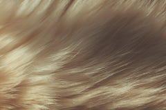 Макрос близкий вверх на мехе кота Стоковые Фото