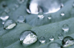 Макрос близкий вверх чисто падения дождя на зеленых лист с venation Стоковые Изображения RF