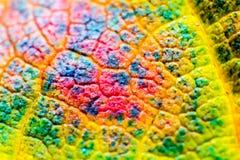 Макрос выходит текстура предпосылки, цвета радуги, мягкий фокус, малая глубина поля Стоковое фото RF