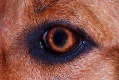 макрос глаза собаки Стоковое фото RF