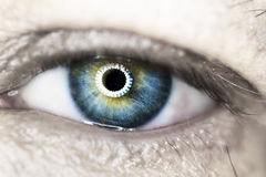 макрос голубого глаза Стоковая Фотография RF