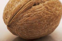 Макрос грецкого ореха Стоковое Изображение