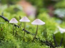 Макрос гриба на зеленом мхе Стоковое фото RF
