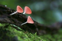 Макрос гриба шампанского стоковые фото
