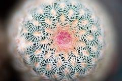 Макрос детали кактуса стоковая фотография rf