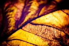 Макрос желтого цвета силуэта листьев осени Стоковая Фотография