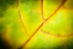 Макрос желтого цвета силуэта листьев осени Стоковые Фото