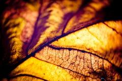 Макрос желтого цвета силуэта листьев осени Стоковое Фото