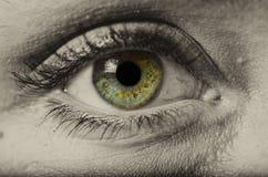 Макрос зеленого глаза женщины изолированный стоковое изображение
