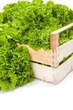 Макрос зеленого салата лист в клети Стоковые Изображения RF