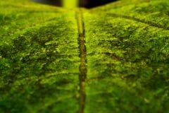 Макрос лист Стоковая Фотография