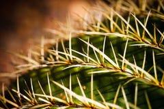 макрос кактуса бочонка золотистый Стоковые Фото