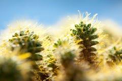 макрос кактуса стоковое фото