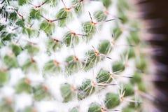 Макрос кактуса Стоковые Фото
