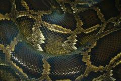 макрос картины кожи и масштабов змейки питона Стоковое Изображение RF