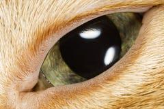 Макрос Конца-Вверх глаза кота стоковое фото rf