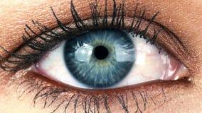 Макрос конца-вверх снятый женский моргать человеческого глаза сток-видео