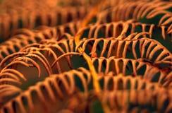 Макрос коричневого цвета падения осени frond лист папоротника Стоковая Фотография RF