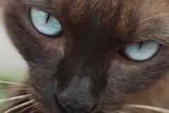 Макрос кота Стоковое Фото