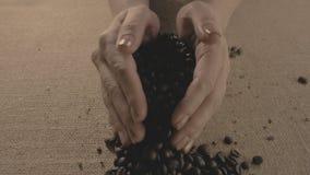 макрос кофе завтрака фасолей идеально изолированный над белизной Руки разбросали кофейные зерна Кофейные зерна касания рук ` s же акции видеоматериалы