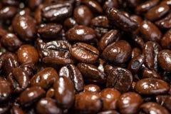 макрос кофе завтрака фасолей идеально изолированный над белизной зажаренный в духовке кофе фасолей предпосылки Стоковое Фото