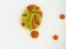 Зелено и красно цветы покрасил микроскопические клетки стоковое изображение