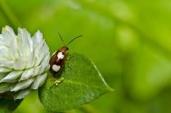 макрос листьев жука коричневый зеленый Стоковое фото RF