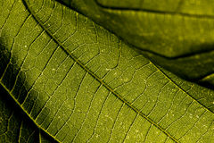 макрос листьев Стоковое Фото